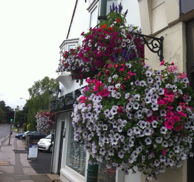Order your Summer Hanging Baskets