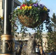 Businesses - order your Hanging Baskets