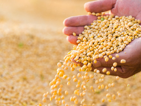 The Future of Food is Already Here – India's Critical Role in Protein Innovation