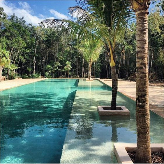 swimming pool, jungle, pool, palm trees, greenery, vacation, relax