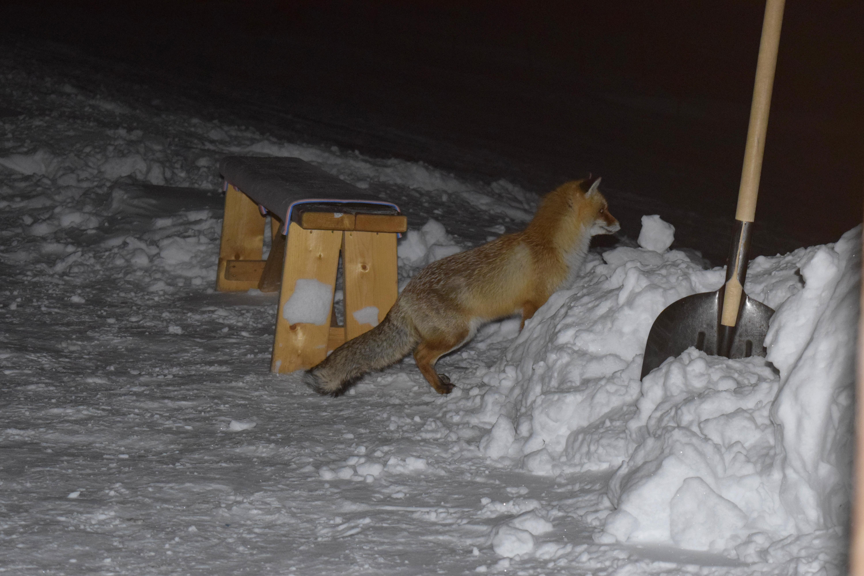 Лисичка- помощница