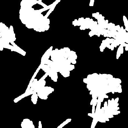 Bushes White
