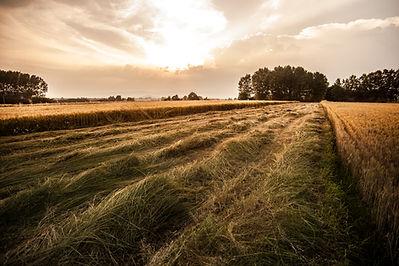 O campo país