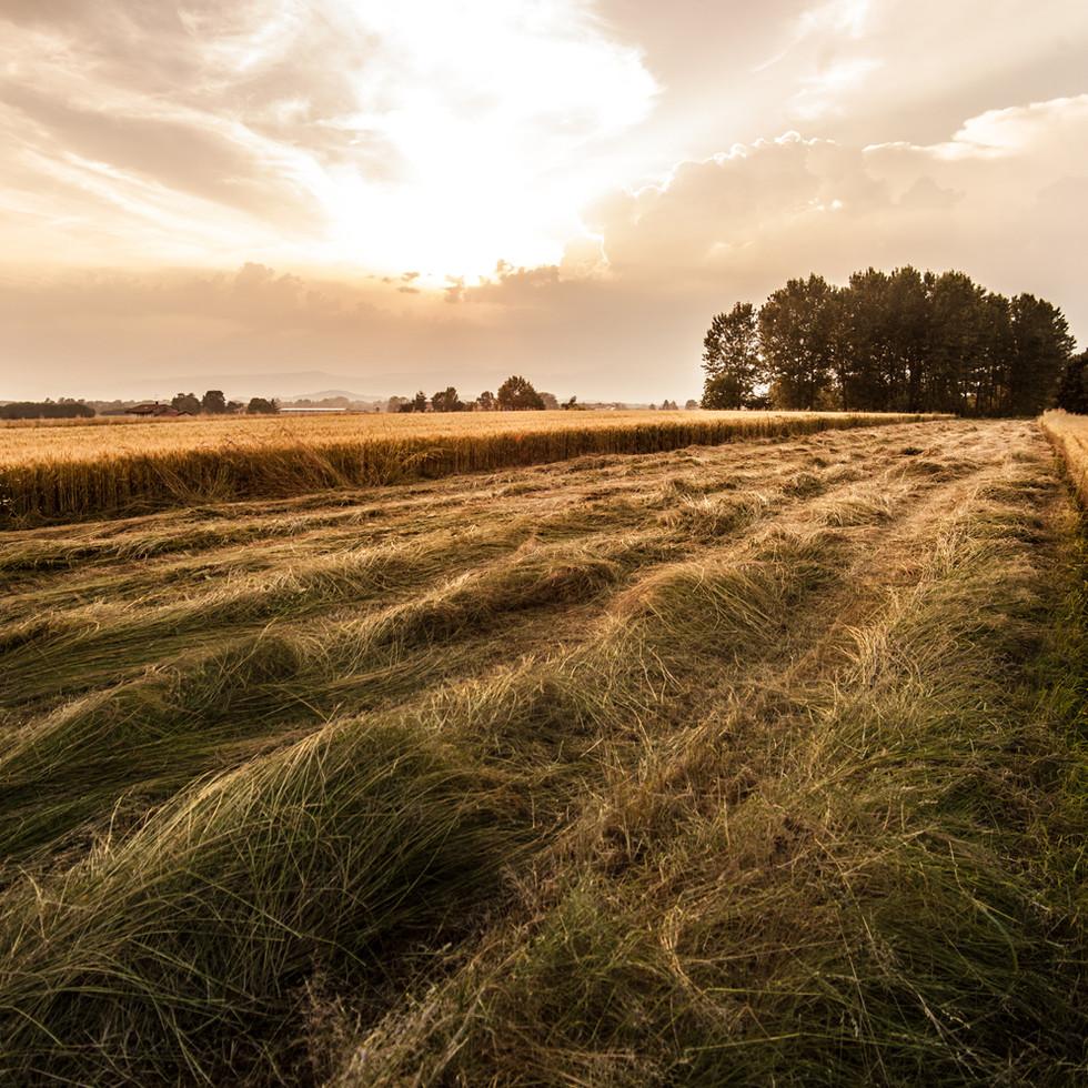Landwirtschaft & Lohnunternehmen