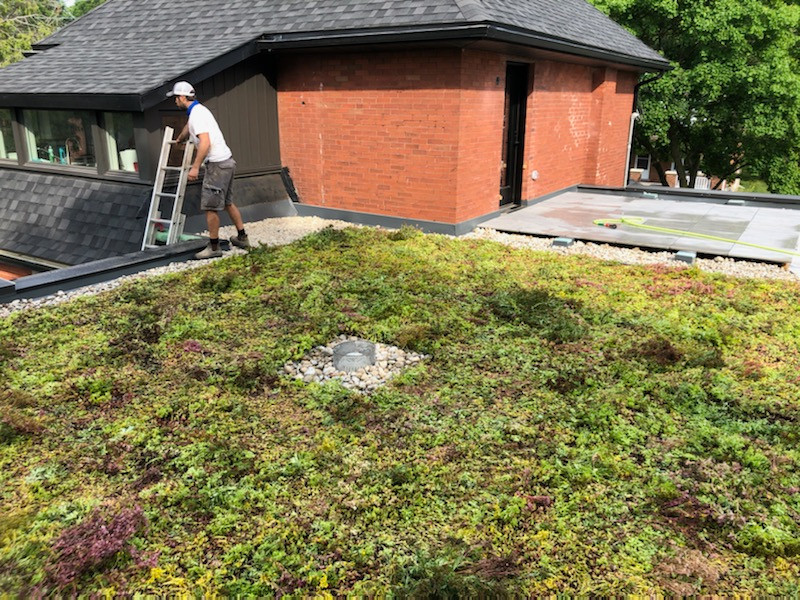 planted roof on University Ave east.jpeg