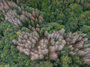 Seh ich den Wald, mein Herz wird schwer...