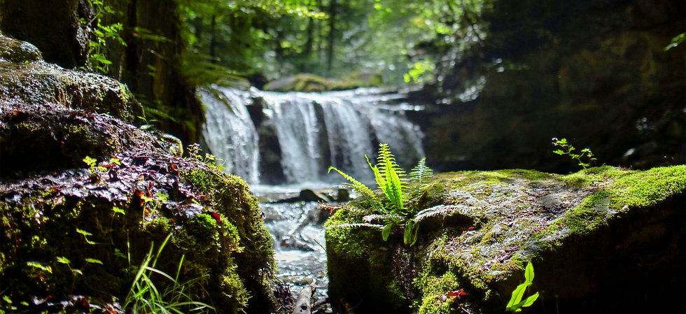 Wasserfall mit Farn editiert 1