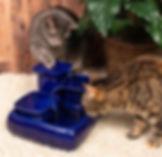 blue-w-cat-1.jpg
