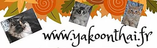 yakoonthai.webp