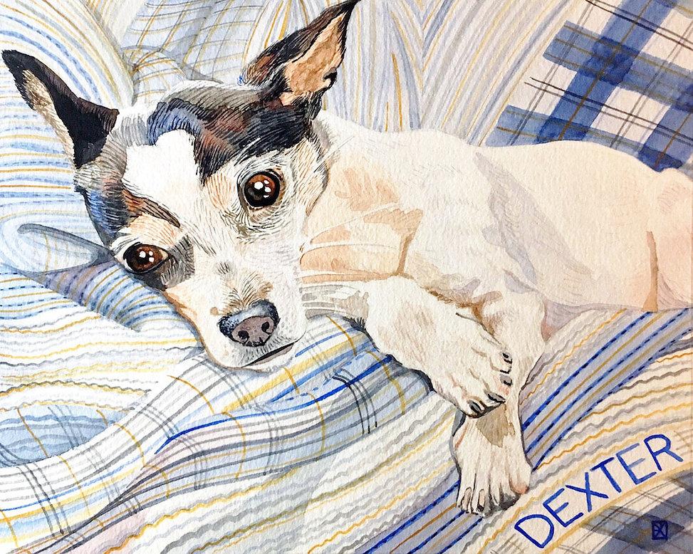 Pet Portait of a sweet, small dog named Dexter.