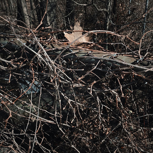 Photograph: a lone, dried maple leaf caught in a rusted chain-link fence, choked and woven through with a riot of bare, vining twigs.