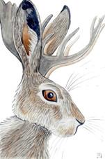 Wild Hare Jackalope