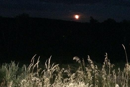 Photograph: an orange moon rises through haze behind a field of tall, late-summer grasses illuminated by hallogen lamplight.