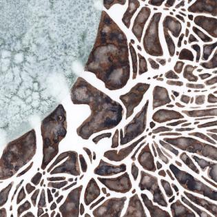 Mycelium Detail