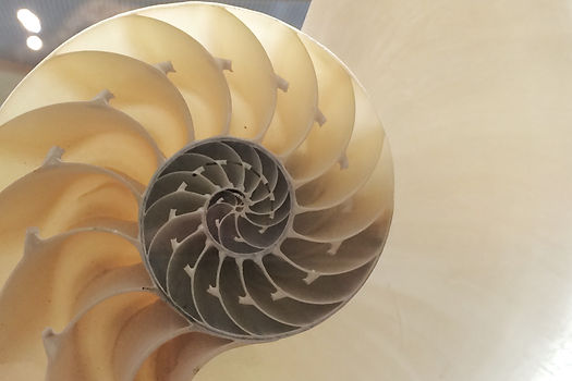 Photograph: the sliced, spiral interior of a large nautilus shell.
