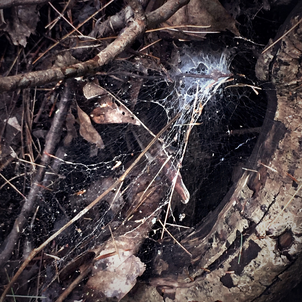 Photograph: a tired, abandoned, gossamer spiderweb stuck full of brown leaves in the roots of a dried stream bed.