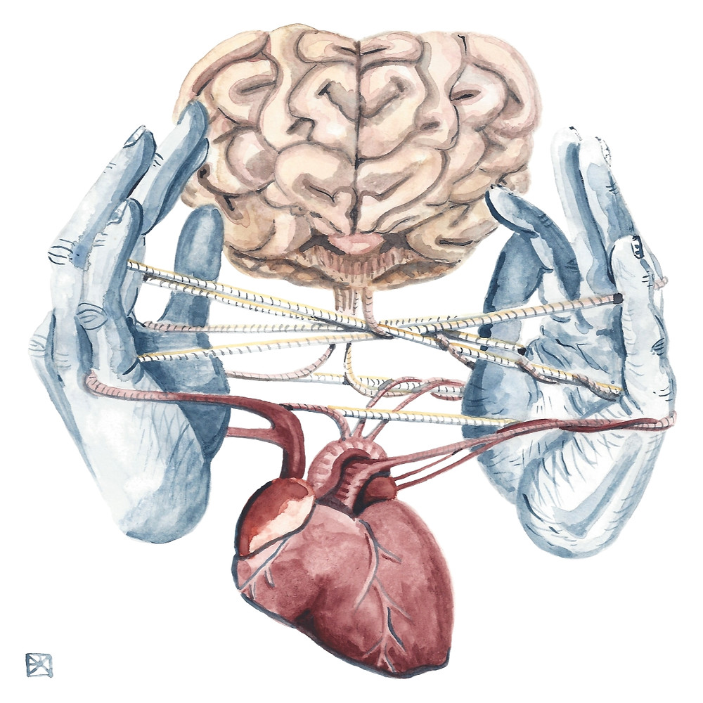 Watercolor Illustration: Two blue hands play cat's cradle with strings running from anatomical, human brain and heart.