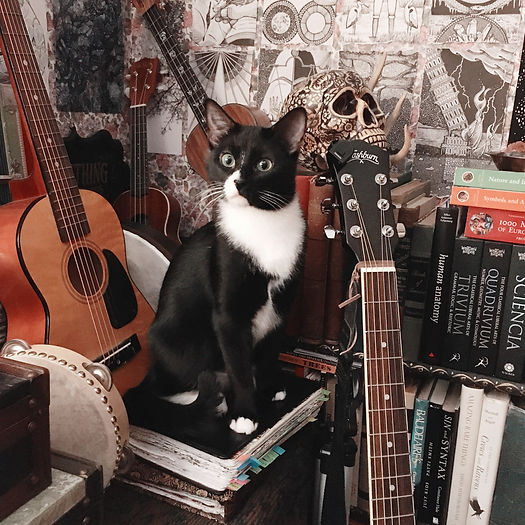 Photograph: a small tuxedo cat sits on the songwriting book in a studio corner, surrounded by musical instruments, vanitas kitsch, and art books.