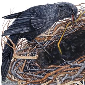 Crow's Nest Detail