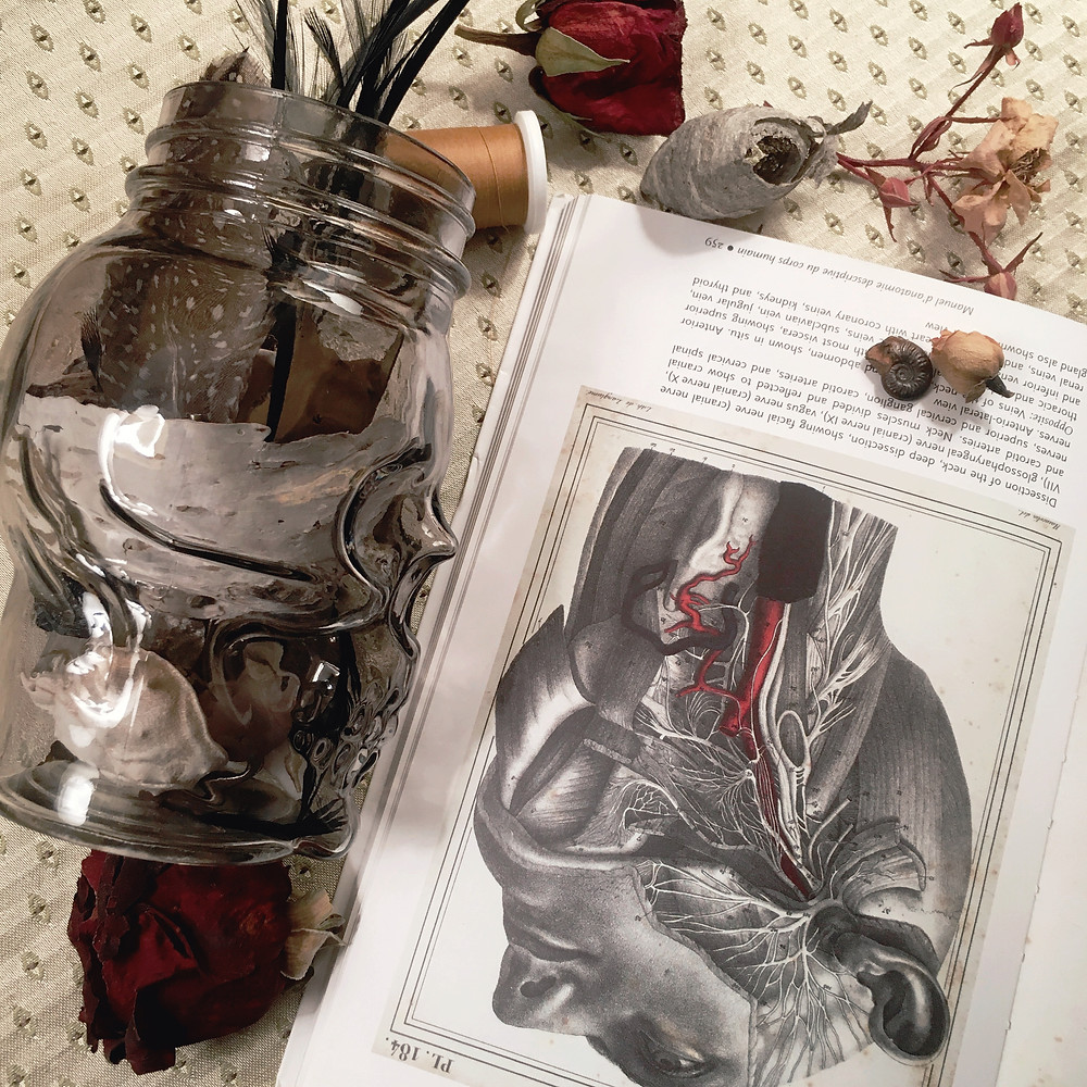 Photograph: Feathers, thread, dried roses, ammonite, and wasp's nest paper spill from a gray jar shaped like a skull, juxtaposed with an open anatomy book featuring an antique illustration of a dissected human throat, and the nerves and veins running from ear to neck.
