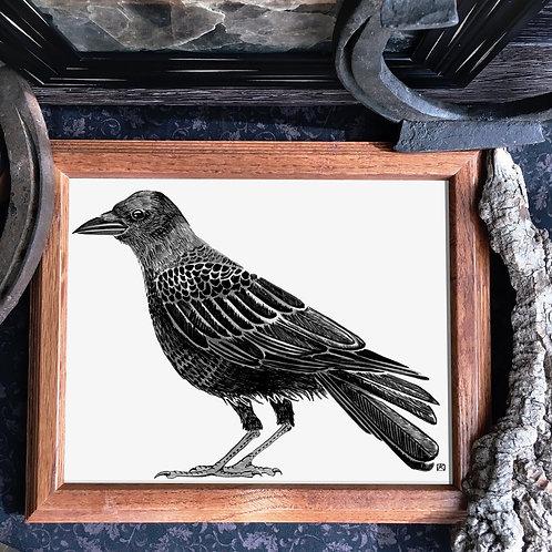 Crow Fine Giclée Print