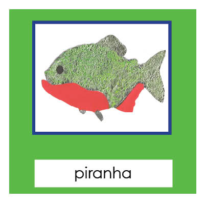 Rainforest Animals 3-Part Cards