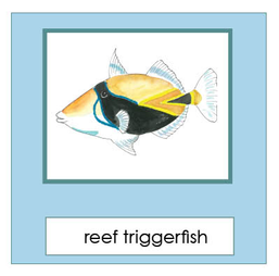Hawaiian Reef Fish-single.png