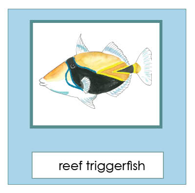 Hawaiian Reef Fish 3-Part Cards