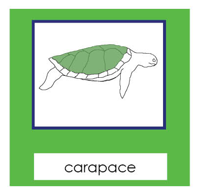 Parts of a Sea Turtle 3-Part Cards