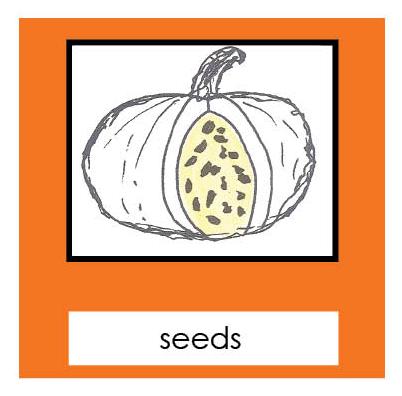 Parts of a Pumpkin 3-Part Cards