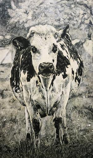Portrait d'une vache normande