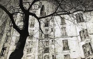 L'arbre et la façade