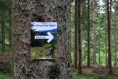 organisierter Weg durch den Wald; Foto NickHarrison.jpeg