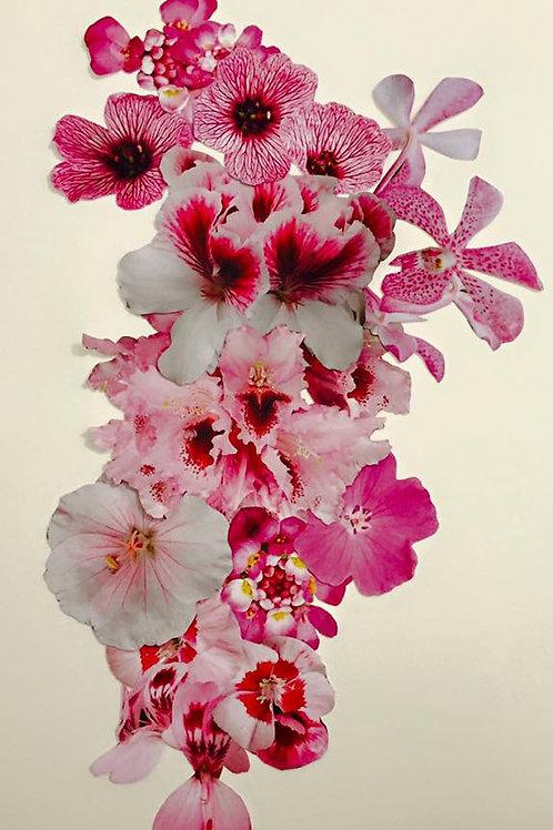 Claudia Veneroni Pink print