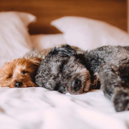 Tips for Optimal Sleep Hygiene