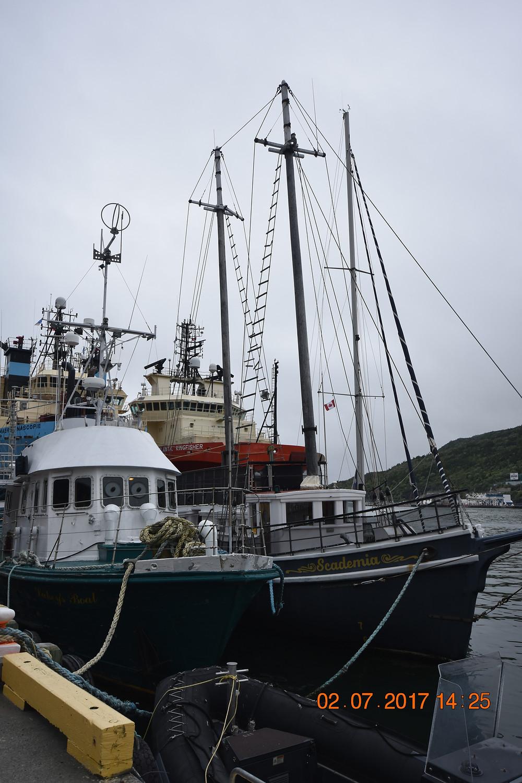 Les bateaux de pêcheurs au quai de Saint-Jean de Terre-Neuve