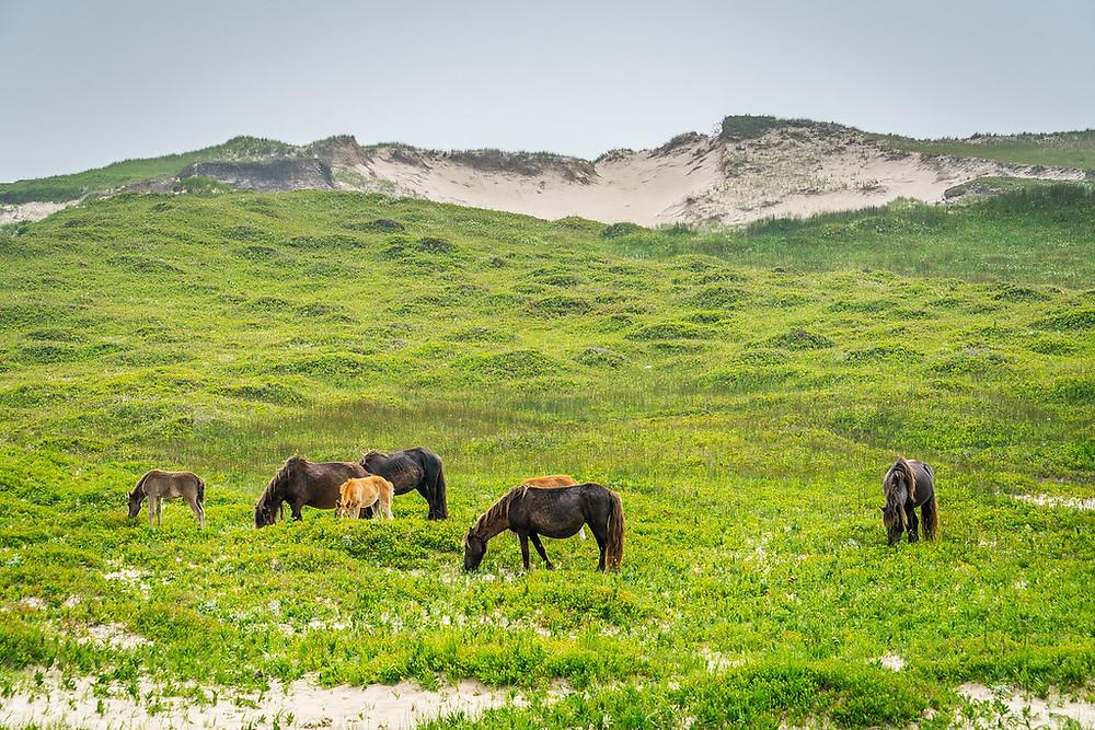 Mes premiers chevaux