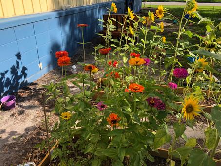 Environmental Science Class Creates a Community Garden