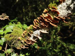 Au grand festin du bois mort - champignons, lichens et mousses