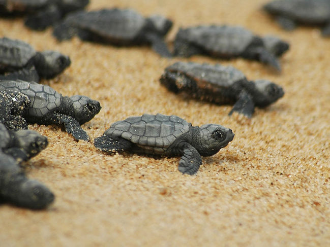 Paphos is home to one of the few nesting beaches for green and loggerhead turtles in Europe
