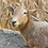 Thumbnail: Sponsor An Animal - Sheep