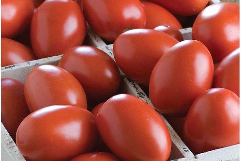 Tomato Plant - Granadero