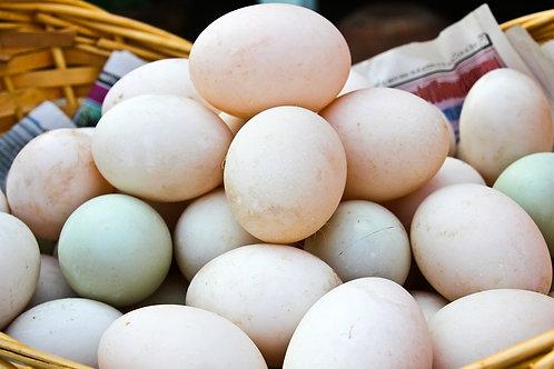 Free-Range Duck Eggs