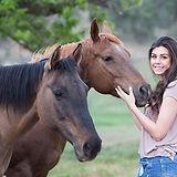 horses-1996285_1280.jpg