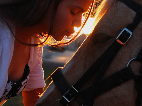 Horse Therapy - How and WHY it Works
