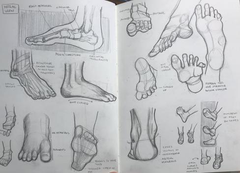 Feet Study