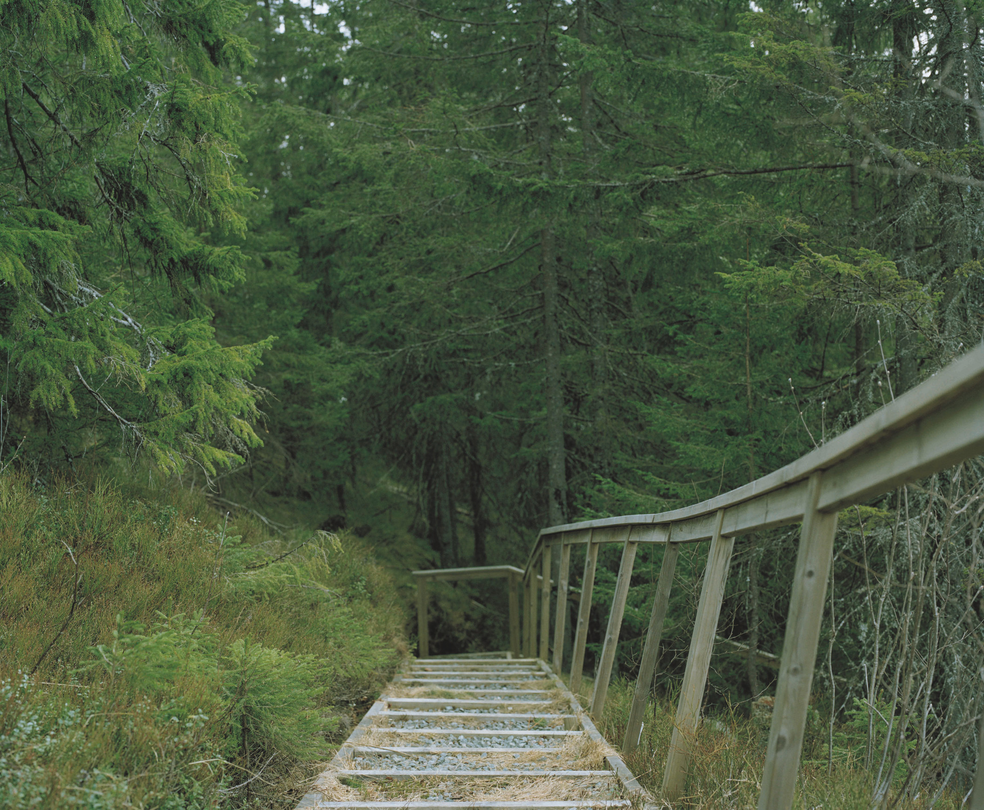 down steps.jpg