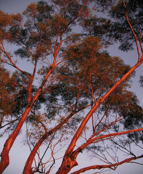 SunsetTrees.jpg