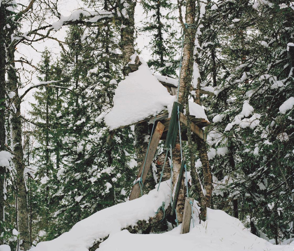 snow treehouse.jpg