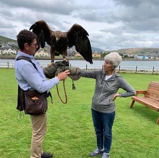Dingle Falconry Experience